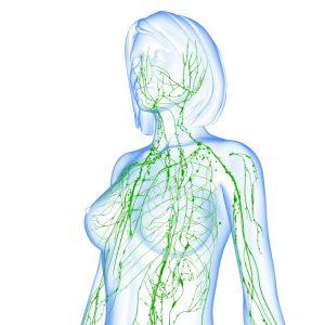 Drenagem Linfática Manual, Sistema Nervoso Autonômico, SFC e Fibromialgia: Parte 1